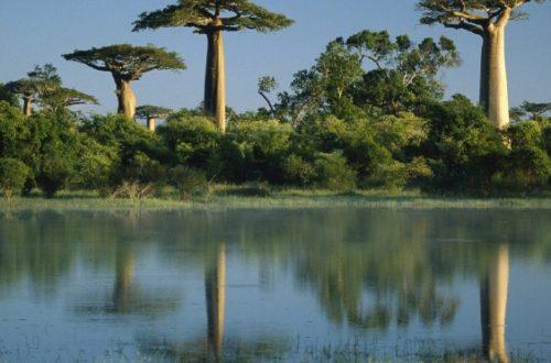 Article : Chez moi, c'est… Madagascar. C'est ma muse.
