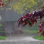 298992__cold-fall-rain_p